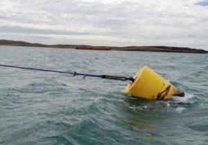 Buoy mooring line